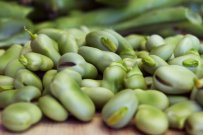Spring's Sweet and Fresh Fava Bean