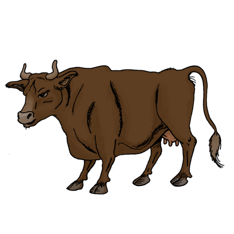 cow, meat,