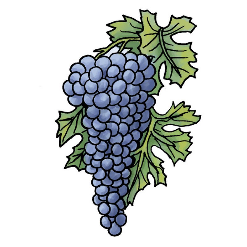 grapes, red wine, vineyards