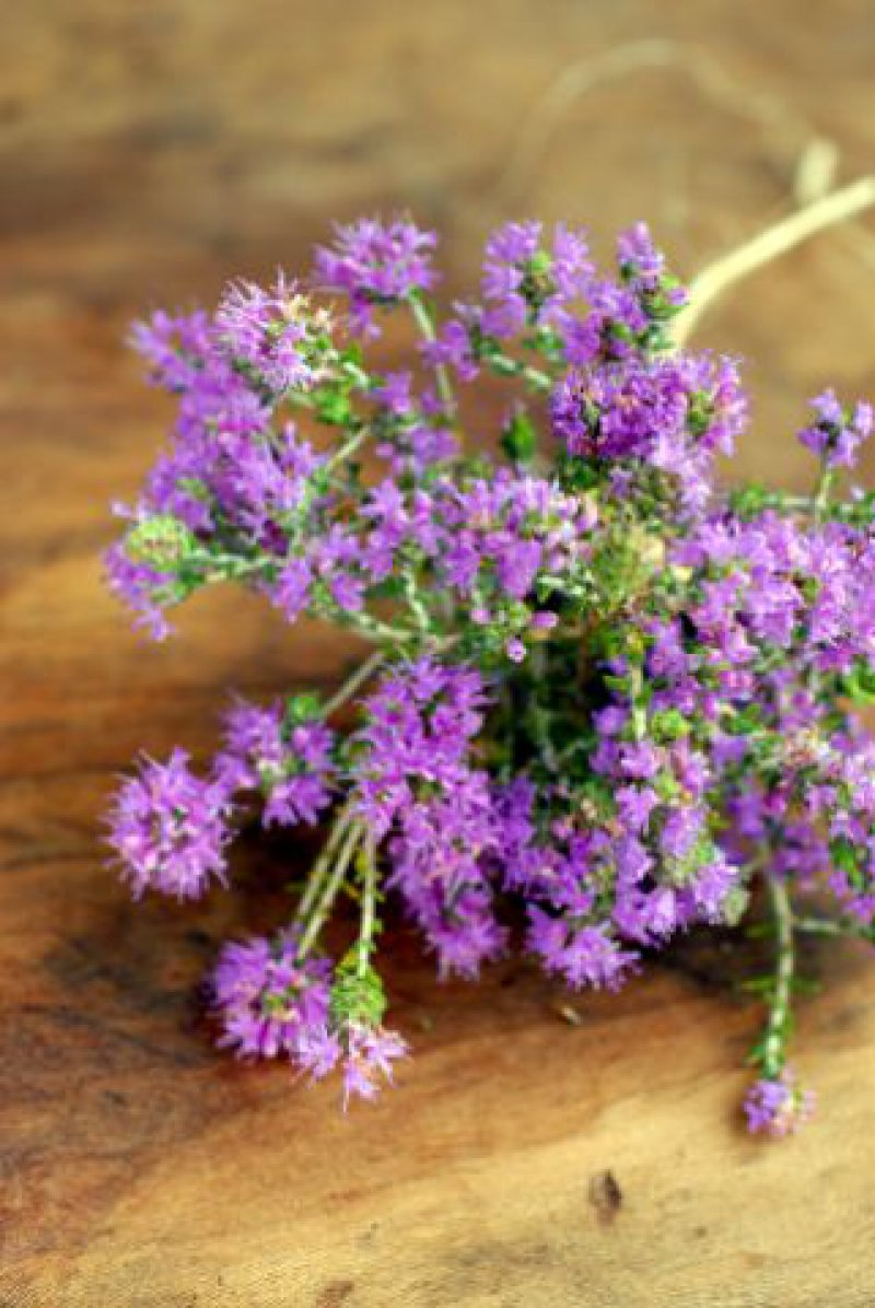 How to Harvest or Purchase, Store, and Preserve Herbs and Wild Plants