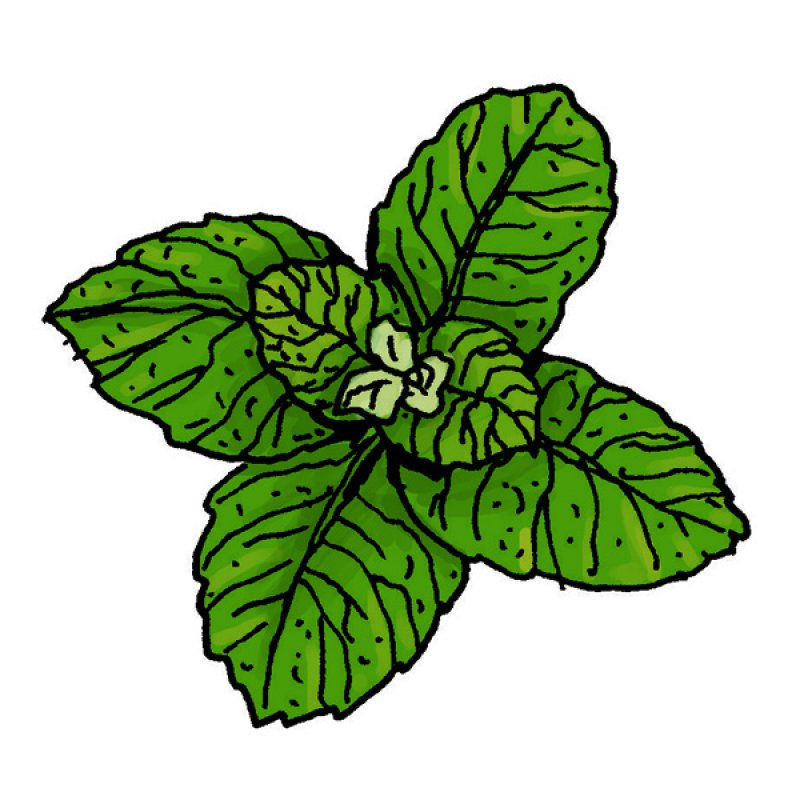 herb, spice, aromas, green leaves, flavour