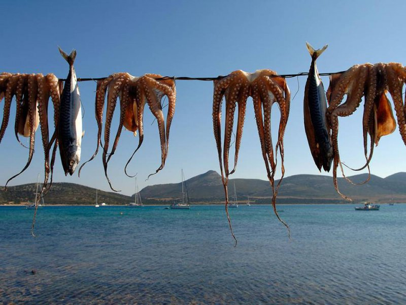 seafood, octopus, fresh seafood, speargun, spearfishing, Greek fishmongers