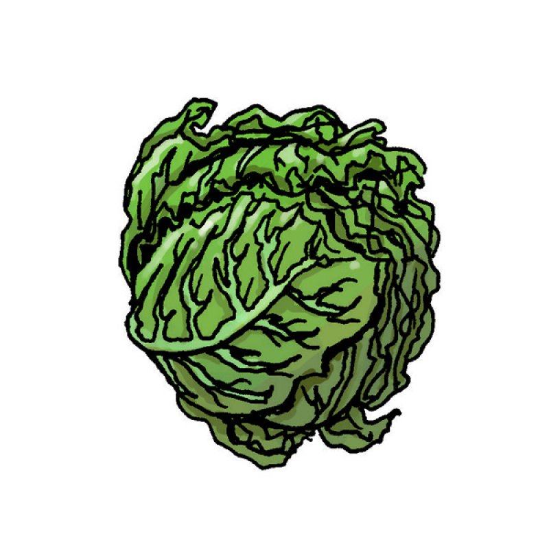 winter cabbage, cooked, boiled, steamed