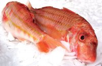 Marinated Red Mullet