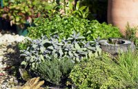 How to Prepare Herbs and Wild Plants